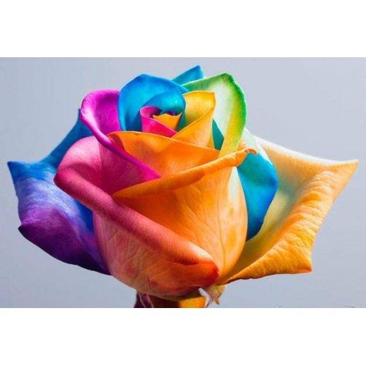 Rosa Arco-Íris - Sementes Raras - Exóticas