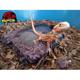 Hickory Hollow Water Bowl M Répteis | Terrário | Pogona |