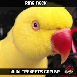 Comprar Ring Neck Maringá