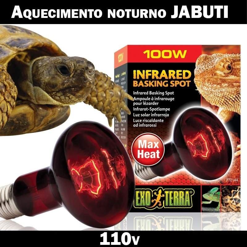 Lâmpada Jabuti