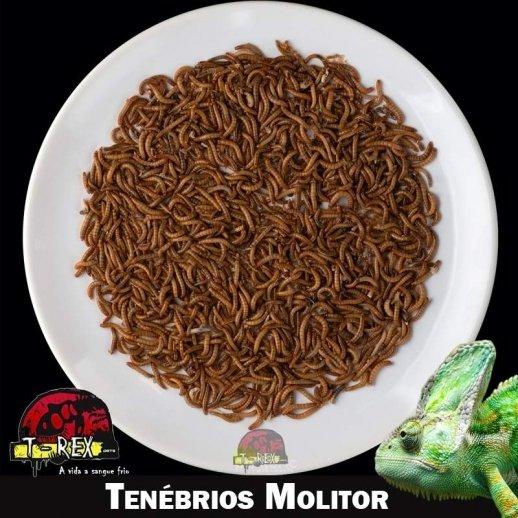 Comprar larvas vivas tenebrio