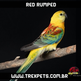 comprar red rumped