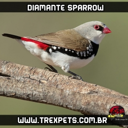 Venda de diamante sparrow