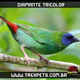 venda de diamante tricolor