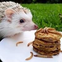 Alimentação | Manejo