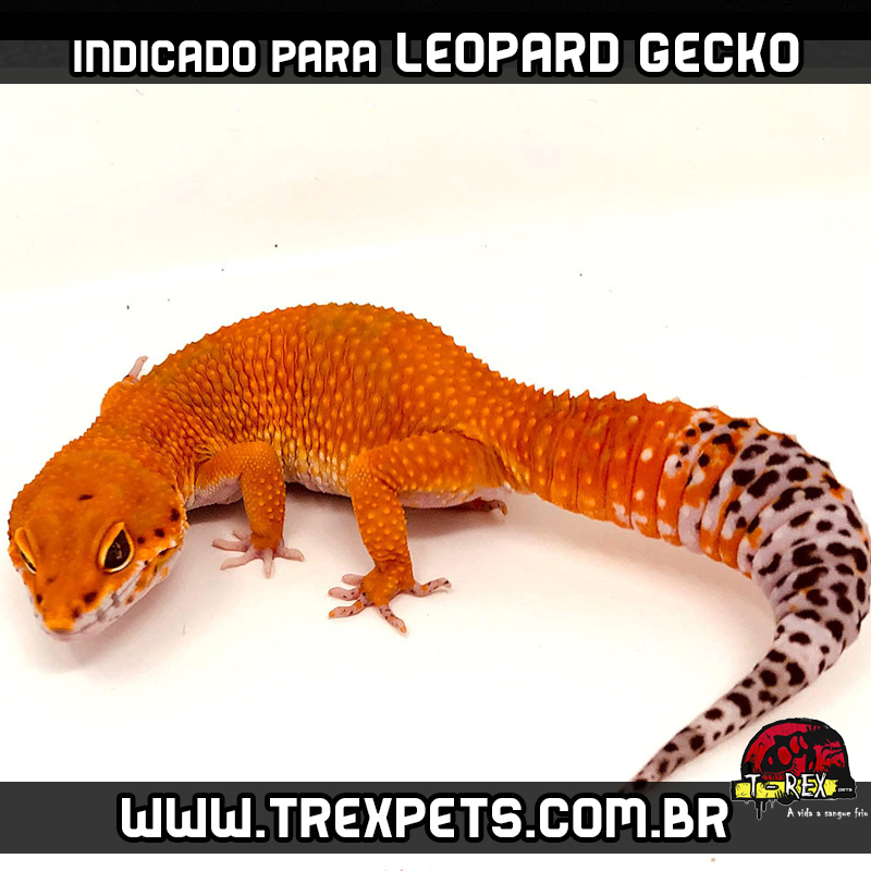 Substrato leopard gecko